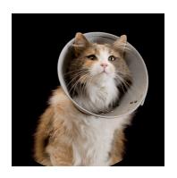 Tarifs pour l'adoption d'un chat ou un chien - Le Coeur sur la patte, association de protection animale aux Herbiers - Vendée 85