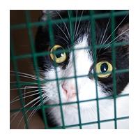 Aider l'association et les animaux en faisant un don - Le Coeur sur la patte, association de protection animale aux Herbiers - Vendée 85